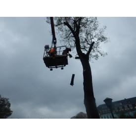 Обрізка аварійних дерев за допомогою автовишок