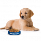 Корма для собак