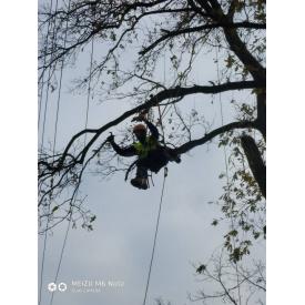 Спил дерев бензопилкою