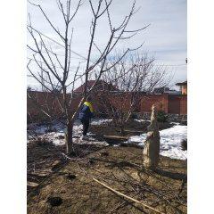 Удаление, обрезка деревьев