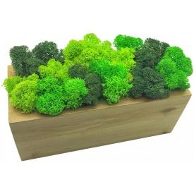 Стабілізований мох в горщику з дерева SO Decor 20×7 см (003)