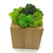 Стабілізований мох в горщику з дерева SO Decor 7×7см (00201)