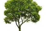 Спил дерев