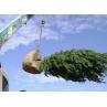 Пересадка крупномірних дерев та кущів