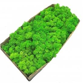 Стабілізований мох SO Green зелене яблуко 0,5 кг (079)