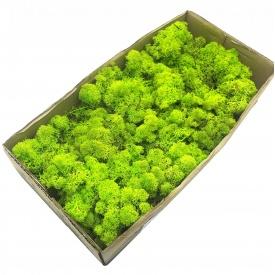 Стабілізований мох SO Green салатовий 0,5 кг (055)