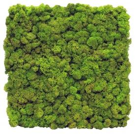 Стабілізований мох SO Green Декоративна панель 1м2 (004)