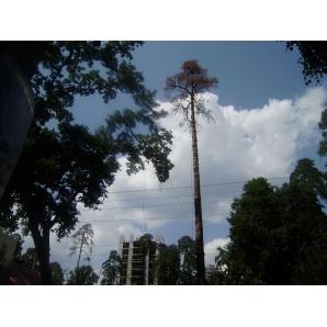 Спилювання аварійних дерев