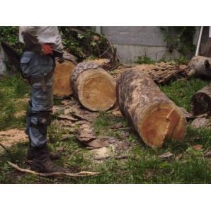Валка дерев на ділянці