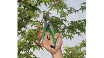 Обрізання дерев, омолоджування дерев