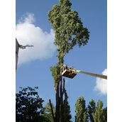 Удаление деревьев частями с автовышки