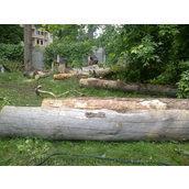 Распиливание деревьев