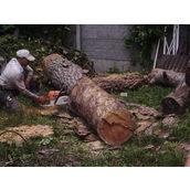 Распиловка деревьев