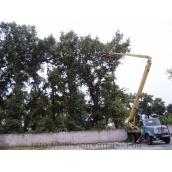 Обрезка веток на деревьях