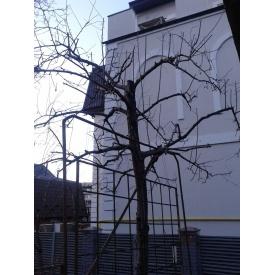 Обрізка дерев саду