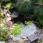 Рослини для водоймищ