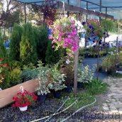 Посадження декоративныйх рослин для саду