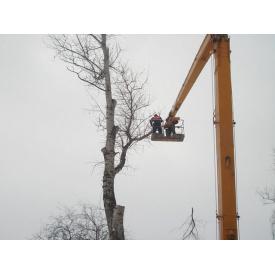 Удаление деревьев спецтехникой