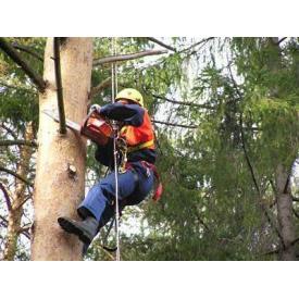 Валка дерев на присадибній ділянці