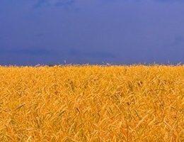 На двох козаків - три гетьмана або Коли підуть реформи