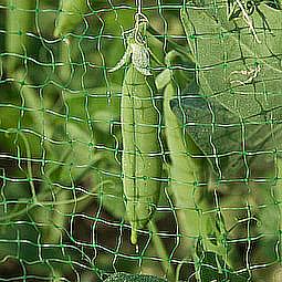 Сітка для захисту врожаю TENAX Ортофлекс 2х10 м зелена