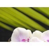 Плитка керамическая BELANI Панно Орхидея 1 35х25 см фисташковый