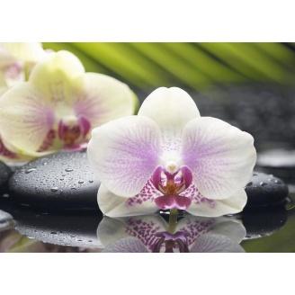 Плитка керамическая BELANI Декор Орхидея 1 35х25 см фисташковый