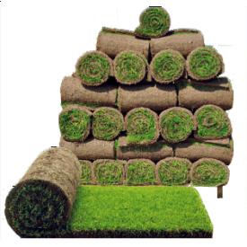 Влаштування рулонного газону