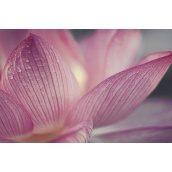 Плитка декоративная Paradyz Acapulco Rosa Inserto Kwiat 250х400х8,1 мм