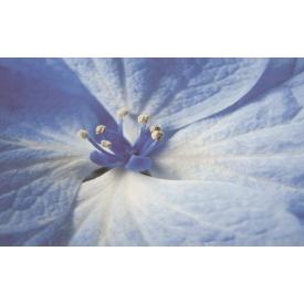 Плитка декоративна Paradyz Acapulco Blue Inserto Kwiat 250х400х8,1 мм
