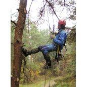Видалення дерева цілком з завішуванням