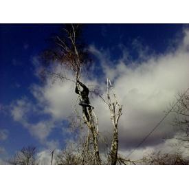 Обрізка дерев на ділянці