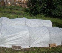 Садовий геотекстиль для захисту рослин взимку