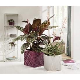 """Кашпо для квітів Modern кераміка 18"""" бургунді куб Scheurich"""