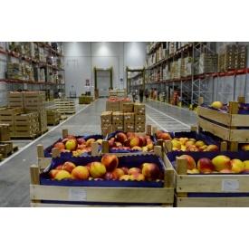 Підлога для овочів і фруктових сховищ