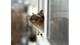 Весна пришла. Пора менять окна!