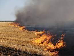 Давно пора: За сжигание травы будут сажать в тюрьму