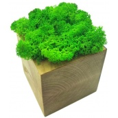 Стабілізований мох в горщику з дерева SO Decor 7×7 см (002)