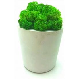 Стабілізований мох в горщику з гіпсу SO Decor 10×7,5 см (001)