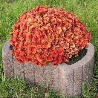 Квітник круглий Золотий Мандарин 660х450х250 мм на сірому цементі коричневий
