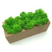 Стабілізований мох в горщику, з дерева SO Decor 20×7см (0030)