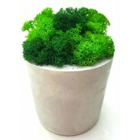 Стабилизированный мох в горшке из гипса SO Decor 10×7,5 см (00101)