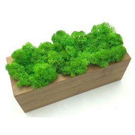 Стабилизированный мох в горшке, из дерева SO Decor 20×7см (0030)