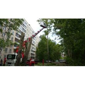 Обрізання сухих гілок на деревах з автовишки