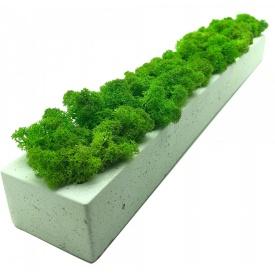 Стабілізований мох SO Green у бетонній кашпо білому 50×5 см (00121)
