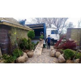 Озеленение территории загородного дома