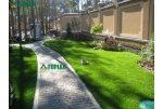 Садові доріжки Топіарі