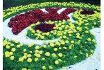 Озеленення територій Топіарі