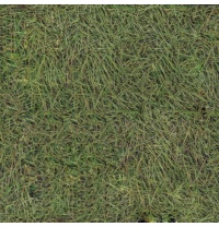 Бытовой линолеум Linoplast Standart Трава 83