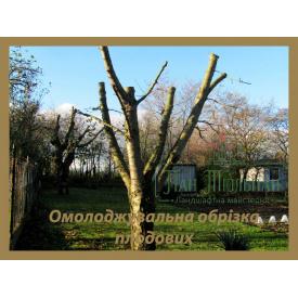 Обрізка плодових дерев кронування